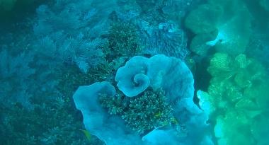 reef15